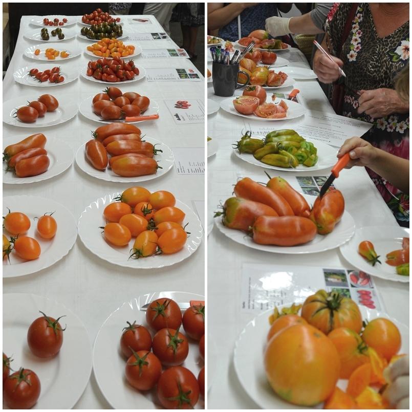 tomatenpflanzen kaufen alte sorten