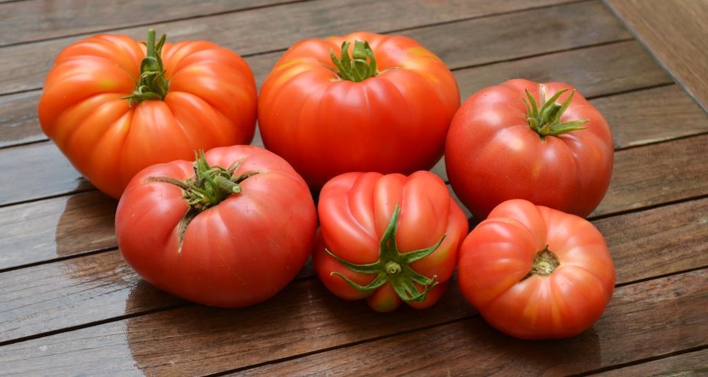 tomat9