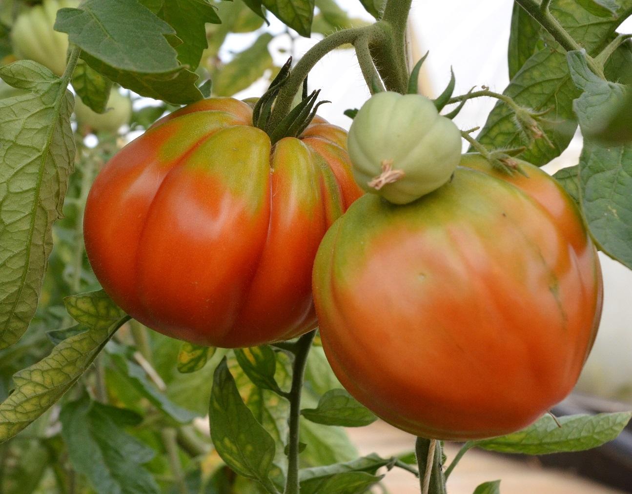 tomaten preith (5)
