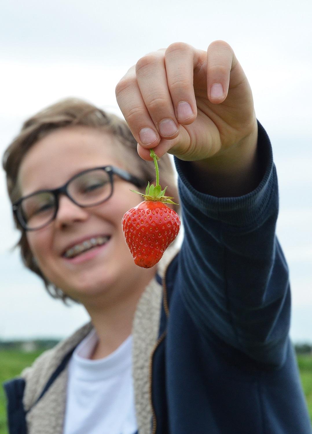 bio erdbeeren (2)